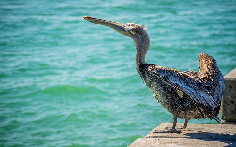 Seas the Day: Get to Know Your Local Seabirds