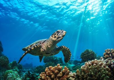 Learn More About Sea Turtle Season in Florida