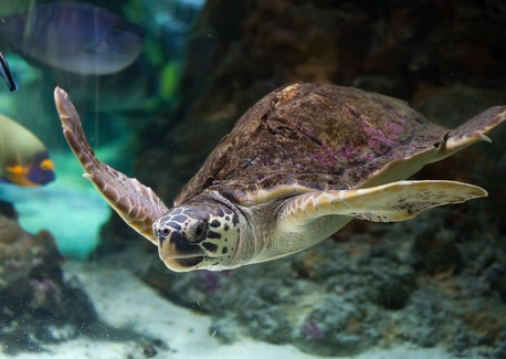 World Turtle Day is Truly a Cause for Shell-ebration!